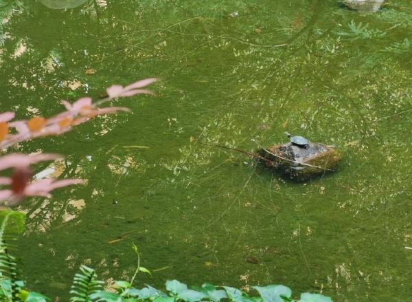 绿莹莹的水面