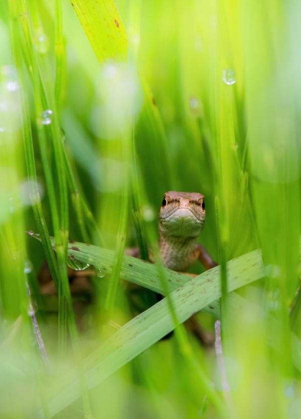 草丛守望者