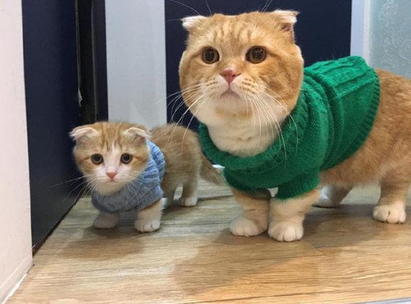 猫咪也有绿毛衣哦