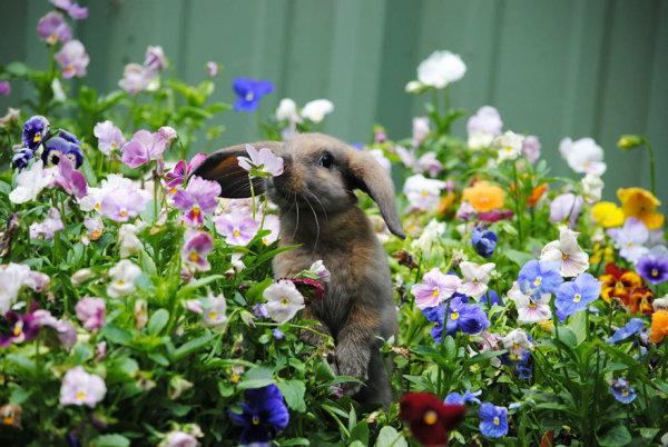 兔子的世界